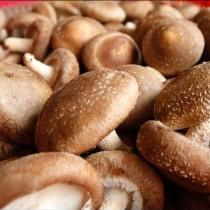 【臻美蔬果】新鮮大香菇