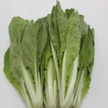 【臻美蔬果】蚵白菜