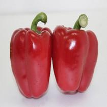 【臻美蔬果】紅甜椒